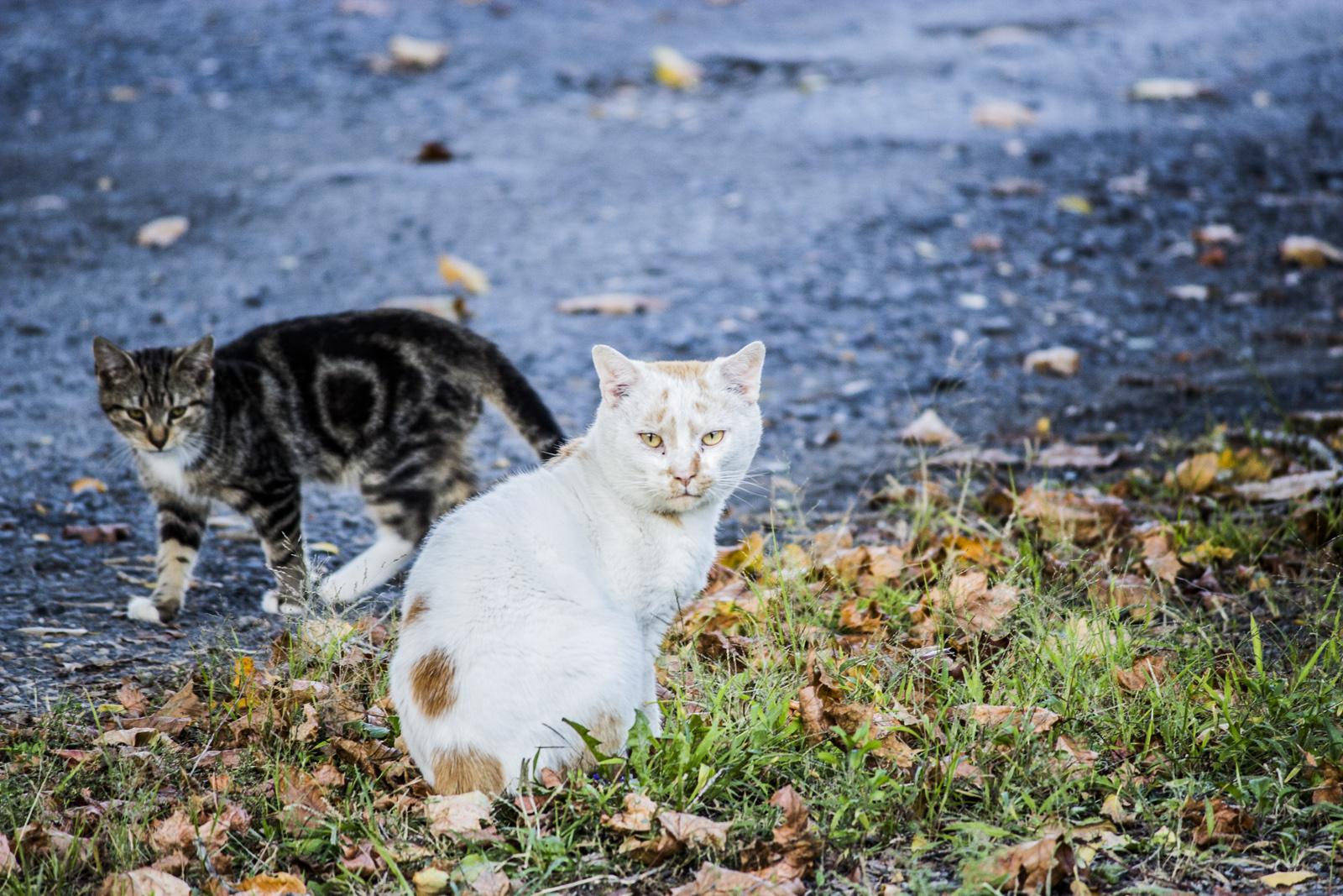 Feral cat #2