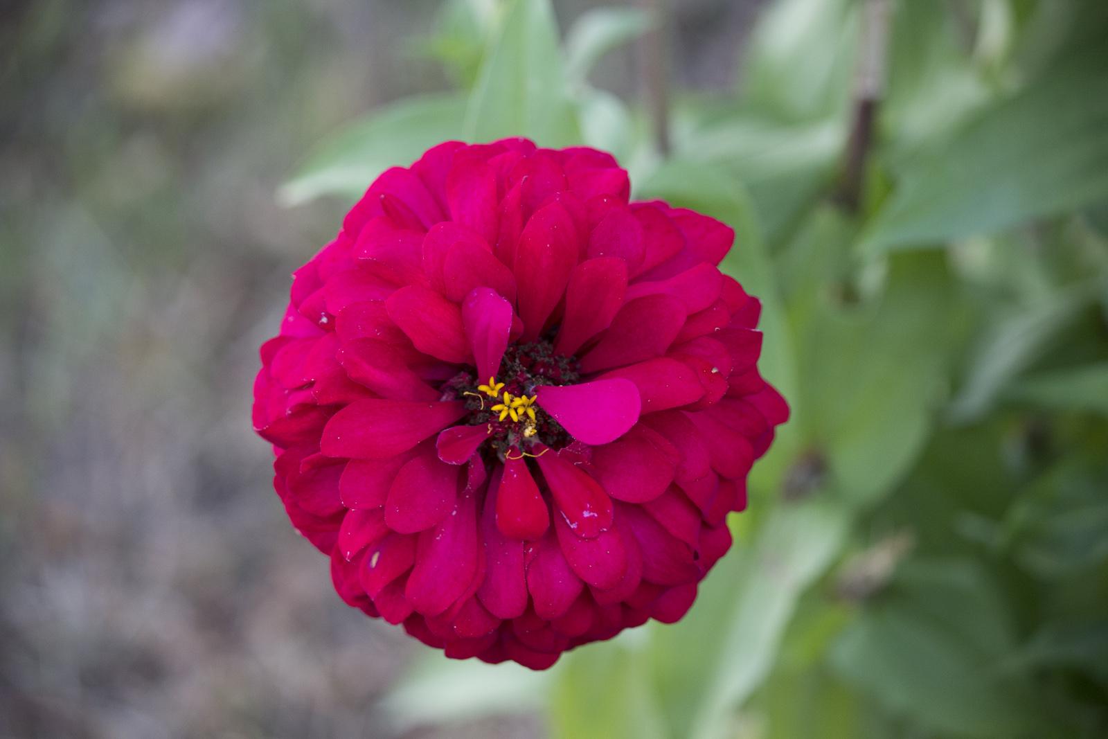 Vibrant Flower Close-up #2