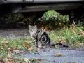 Feral cat #1