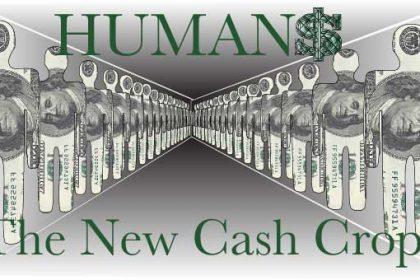 Humans the new cash crop