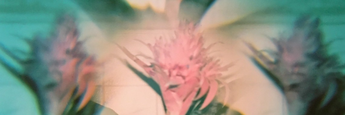 Pic of Flower Lomography